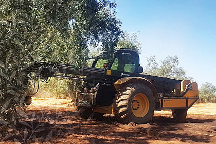 Machine-operated olive harvesting